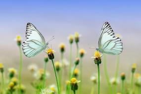 Metodické príručky k prírodovede sú ONLINE